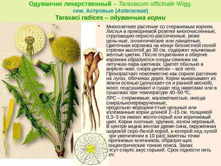 9_2015g_tio-glikozidy_gorechi_32.jpg