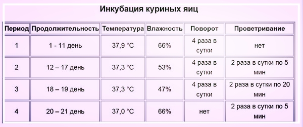 Inkubaciya-kurinykh-yaic_12-55-56.jpg