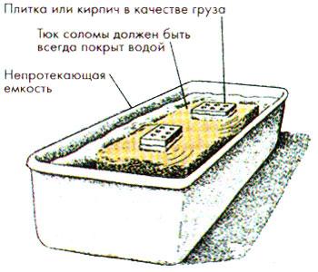 veshenka_solom2.jpg
