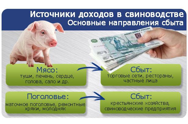 istochniki-dohodov-svinovodstva.jpg