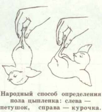 коммент 3.jpg