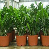 Названия комнатных растений — Цветы в доме
