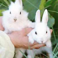 Размножение кроликов в домашних условиях особенности