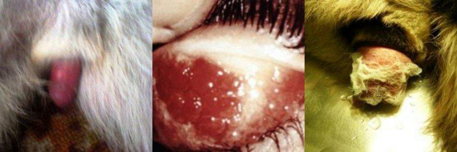Болезни нутрий и их лечение