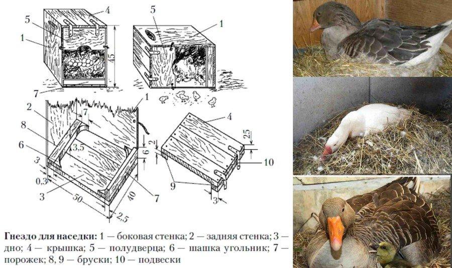 Как сделать гнездо для птиц и их инструкция сделать своими руками