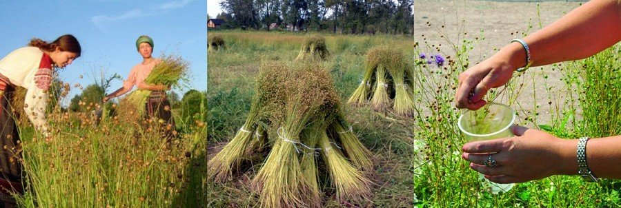 Специалист по выращиванию льна 42