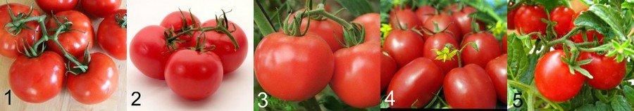 Сорта помидор для Подмосковья