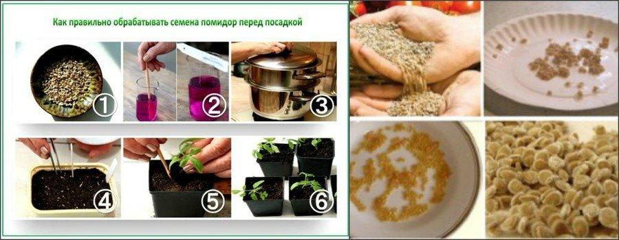Как подготовить семена помидоров к посадке
