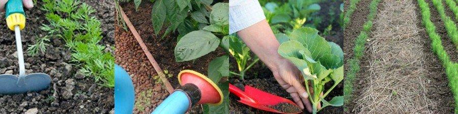 Уход за растениями в открытом грунте