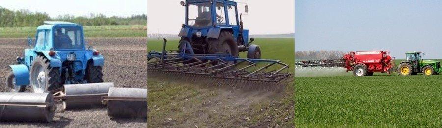 Выращивать пшеницу в домашних условиях