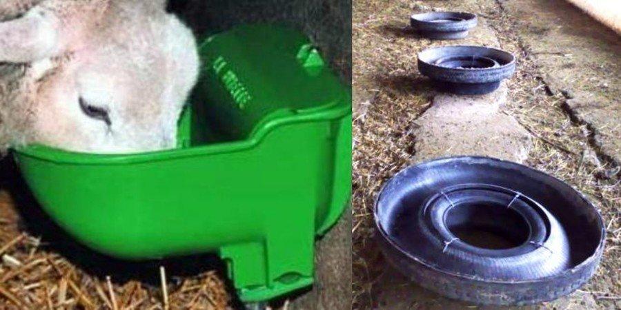 Содержание и уход за козами в домашнем хозяйстве