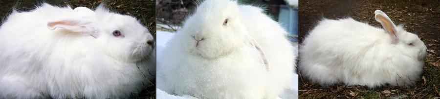 Белый пуховой кролик
