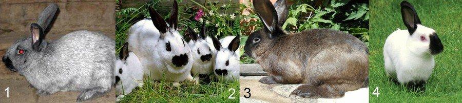 Меховые породы кроликов