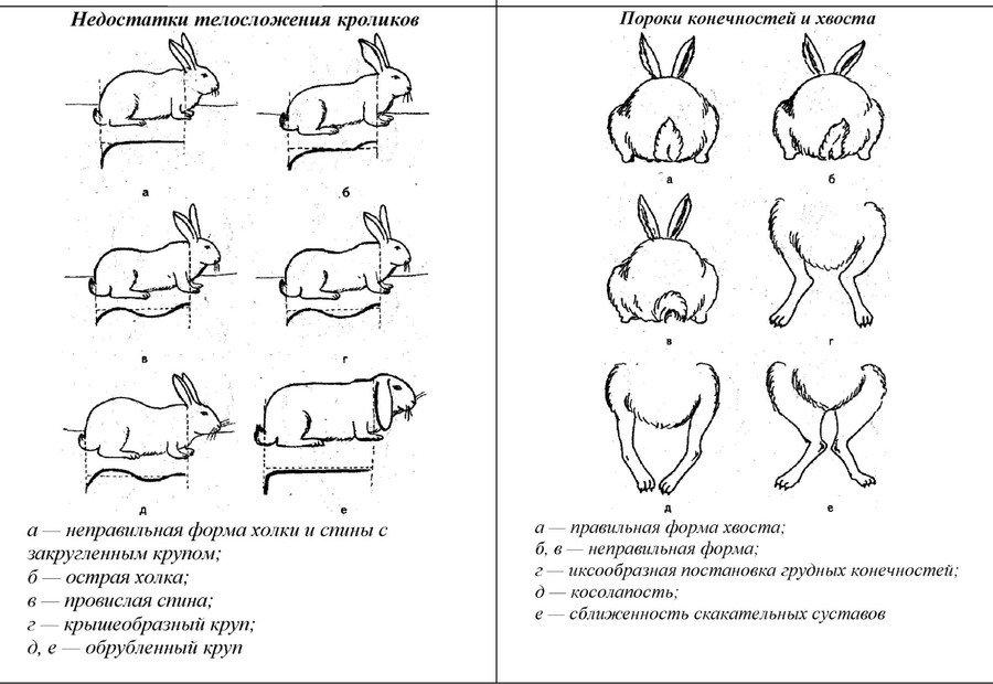 Дефекты у кроликов
