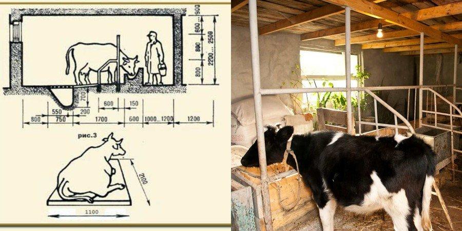 Стойло для коровы чертеж