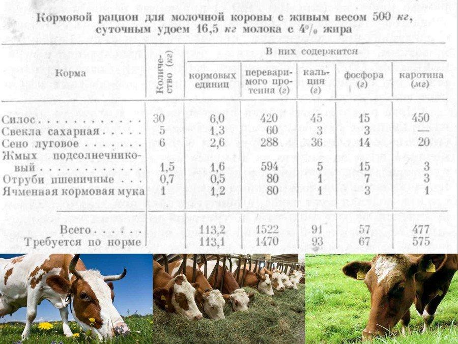 Как составить рацион для коровы