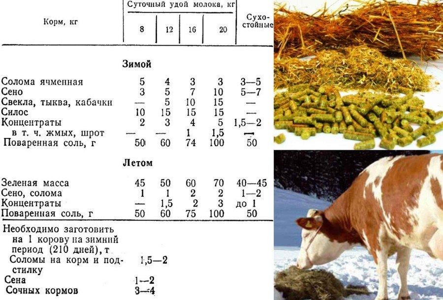 Кормление коровы зимой
