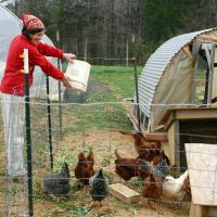 Выращивание и разведение кур в домашних условиях для начинающих