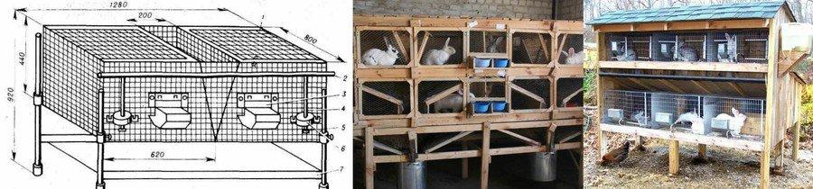 Откорм кроликов на мясо в домашних условиях: советы для фермеров