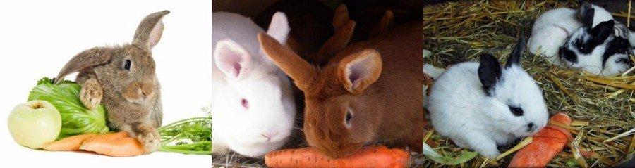 Чем кормить кроликов: в домашних условиях