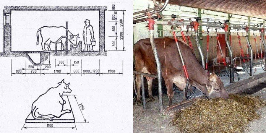 Овцы Разведение содержание овец Домашняя ферма