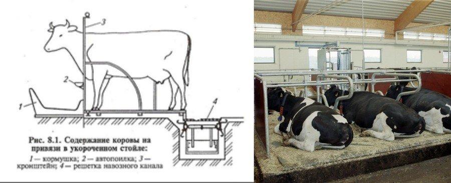 Смотреть содержание коров в домашних условиях