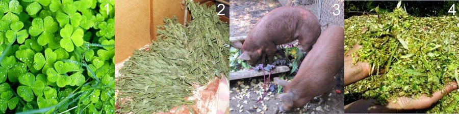 открытие выставки какой травой можно кормить поросят с фото объяснили