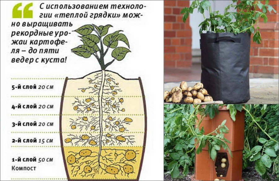 Выращивание картошки в бочке
