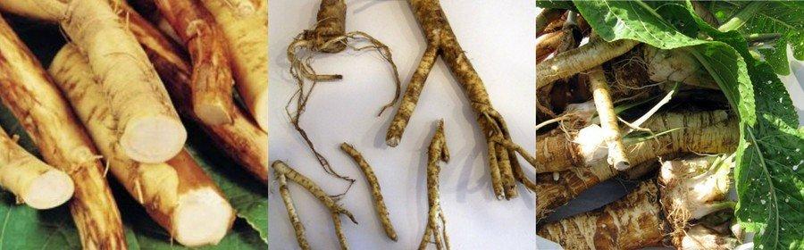 Корешки для размножения хрена