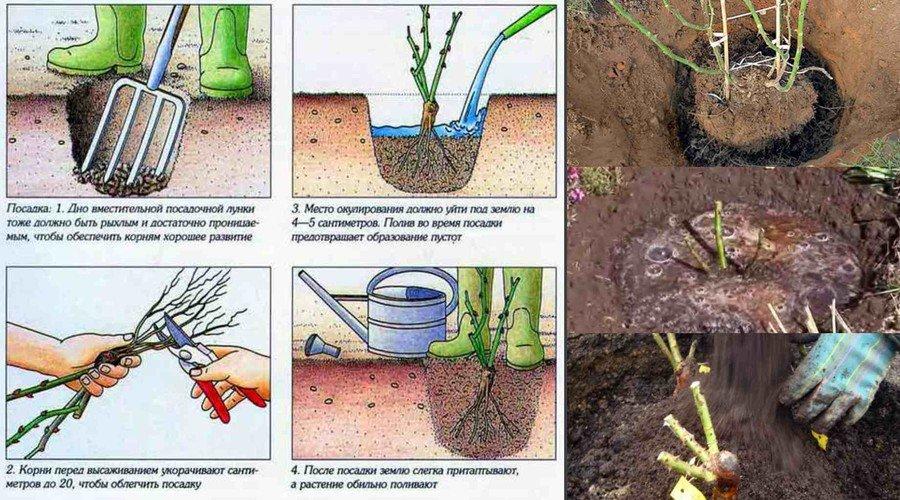 Как вырастить грибы в подвале: технологии