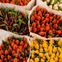 Как хранить луковицы зимой до весны? Как сохранить луковицы тюльпанов в домашних условиях.