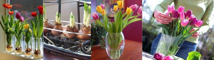 Хранение тюльпанов в воде