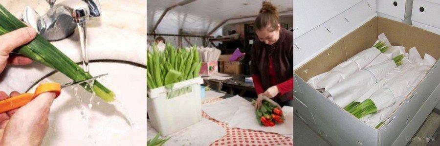 Как хранить тюльпаны в холодильнике