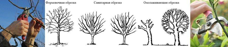 Обрезка плодовых деревьев весной в Подмосковье: сроки