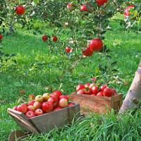 Сезонные работы в саду: уход за садовыми деревьями ранней весной