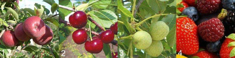 Виды садовых культур