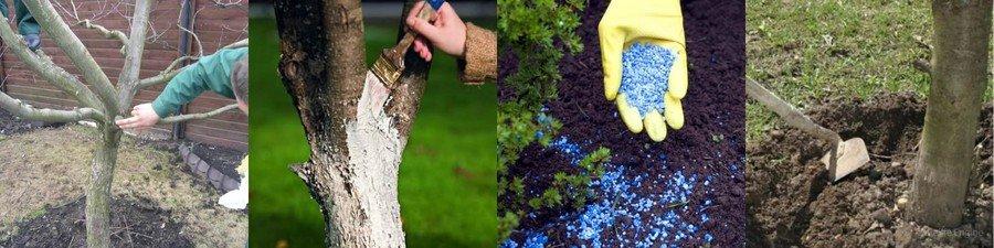 Картинки по запросу Уход за плодовыми деревьями: прививка, побелка, выбор.