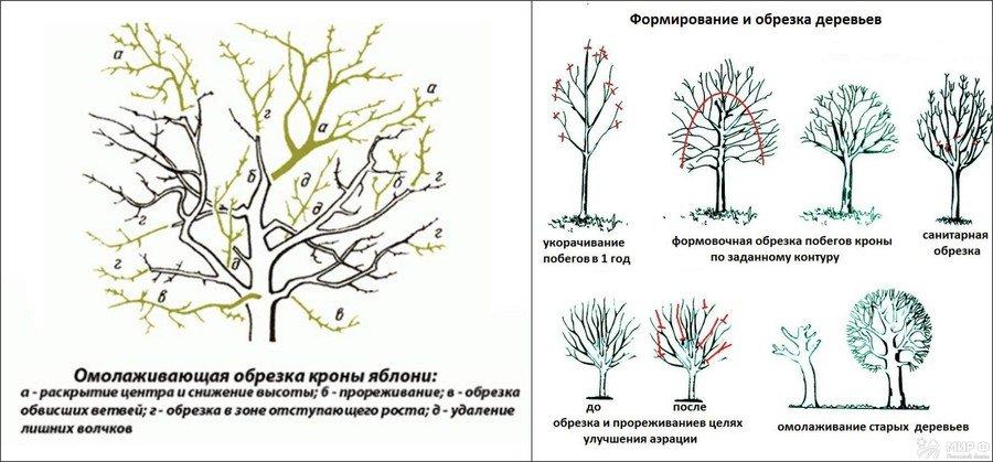 когда и как обрезать плодовые деревья весной