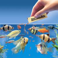Как кормить рыбок в аквариуме? 22 фото Как часто нужно кормить аквариумных рыб? Как давать хлопья и другой корм? Кормление мальков в общем аквариуме