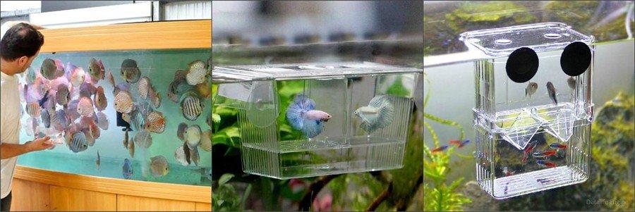 Как разводят рыбу в домашних условиях
