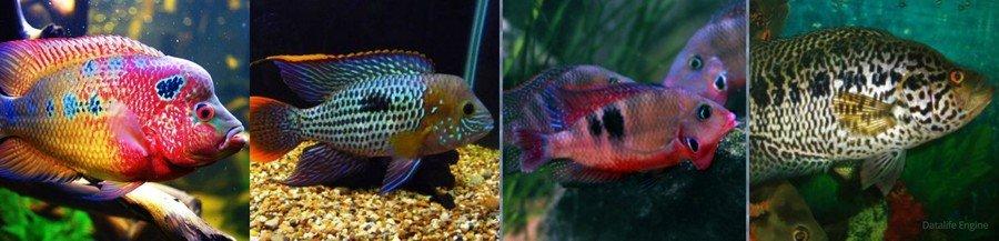 Какие бывают виды аквариумных рыб