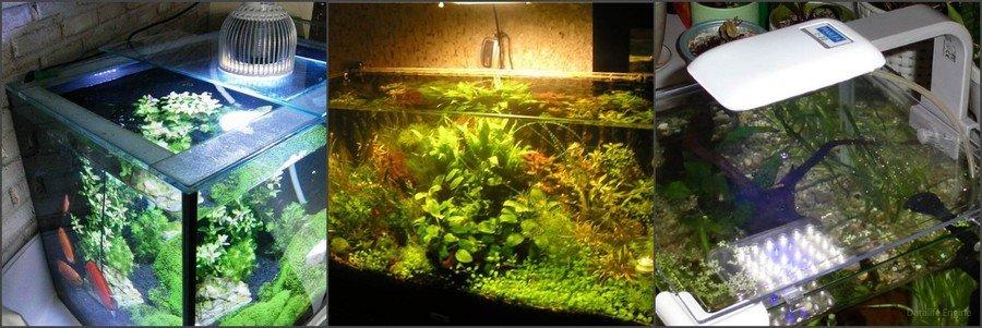 Как выбрать лампу для аквариума