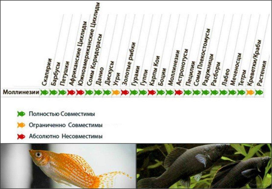 Совместимость аквариумных рыб