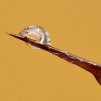 Влияния яда пчел на человека