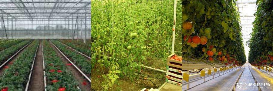 Овощная теплица фото