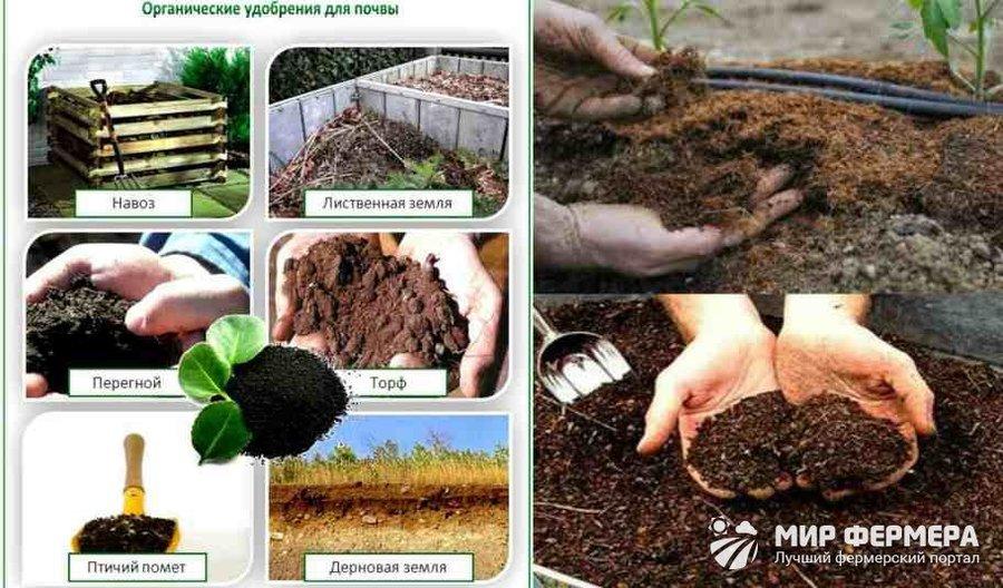 Удобрения и подкормка земли в теплице: минеральные и органические добавки