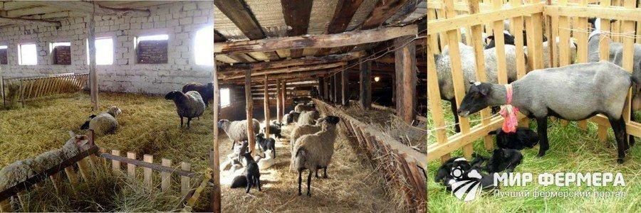 Содержание овец с ягнятами