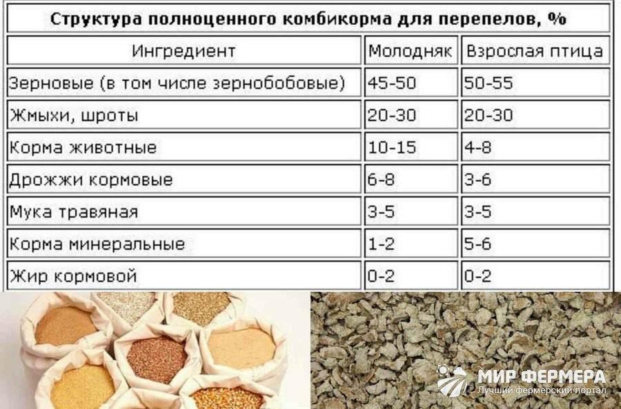Корма для перепелов рецепт