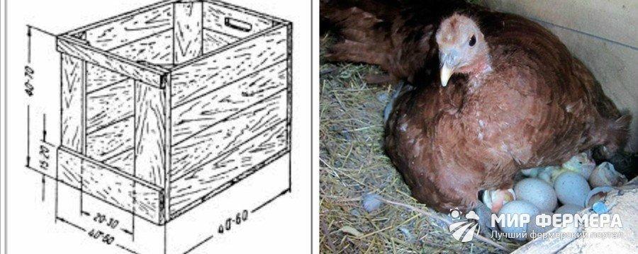Как сделать гнездо для индейки своими руками