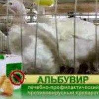 Альбувир для лечения голубей